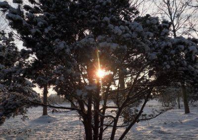 Pinus sylvestris Norske Typ ca. 4m hoch KONIFEREN